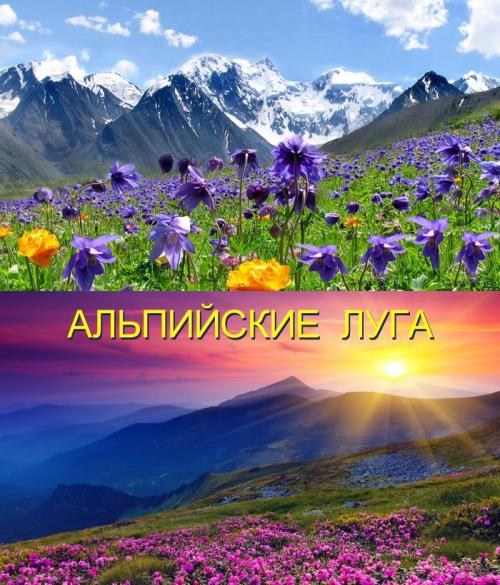 Вебинар Павла Ракова «Альпийские Луга» (бесплатно)